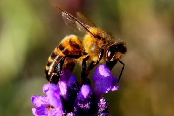 La campagne annuelle de déclaration obligatoire de ruches a commencé